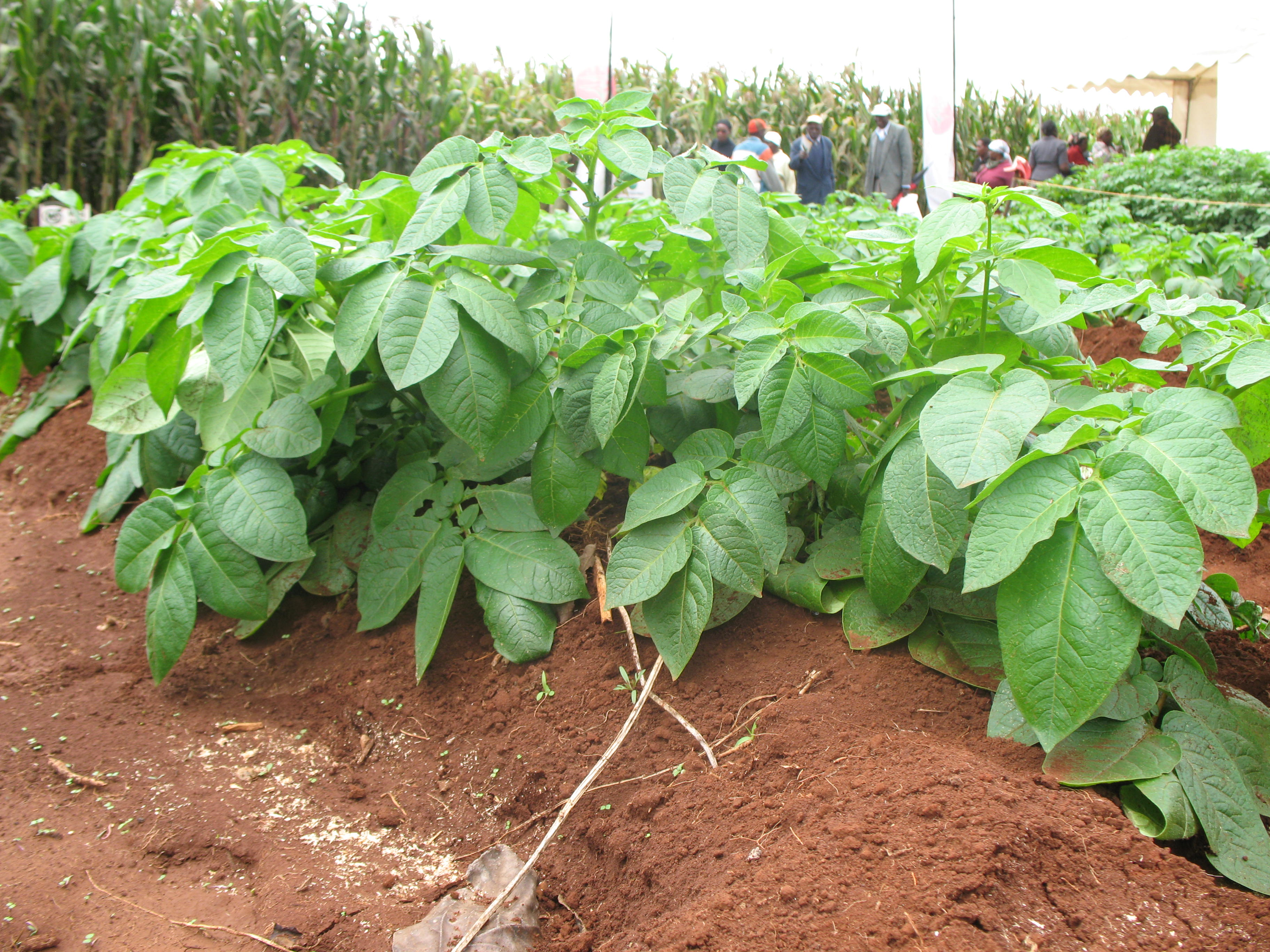 The need for integrated soil fertility management kaaa for Soil fertility